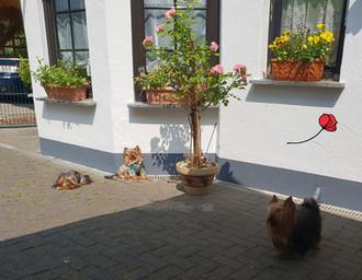 Auslauf für die Hunde vor dem Haus