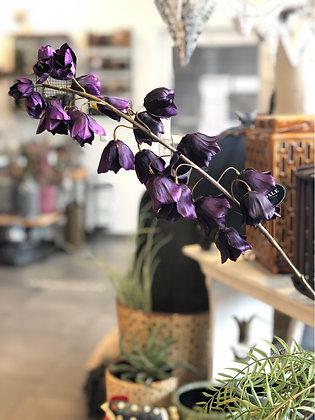 Blume Kunst