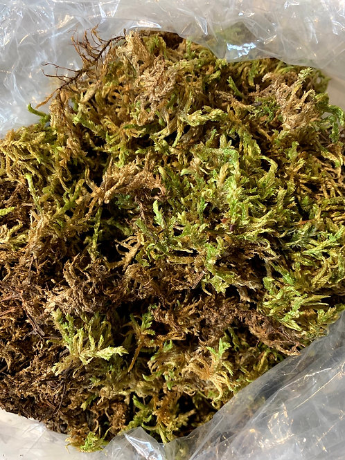 Sphagnum Moss - 5L Bag