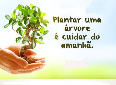 Plantar uma árvore é cuidar do amanhã, mas requer cuidados com a rede elétrica.