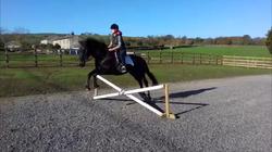 Equestrian arena construction