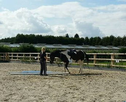 Equestrian arena construction, Selby