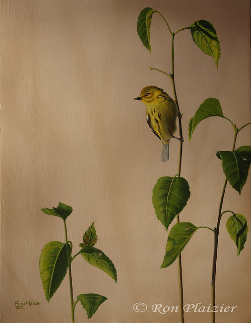 """Yellow Warbler 14""""x11""""- Sold"""