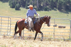Boomer - ranch horse