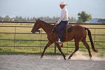 Horse trained by Randy Jones
