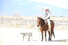 Montana Horses for Sale