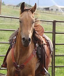 Montana Horse Trainer