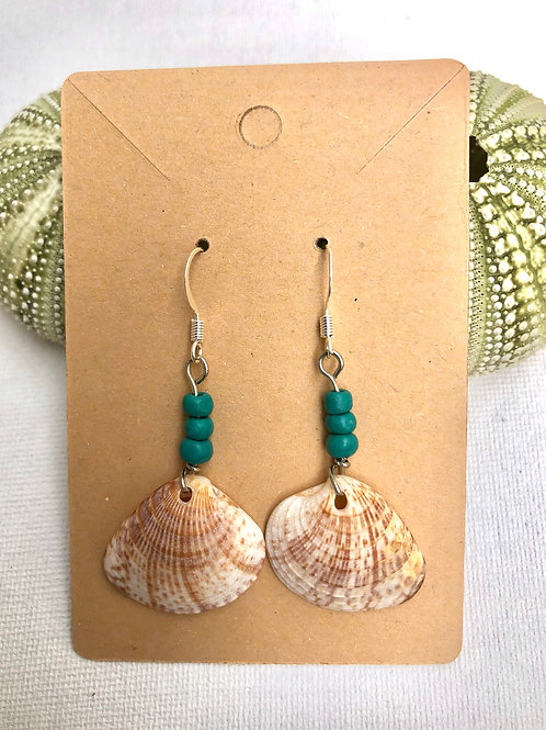 Turquoise Caribbean Shell Earrings