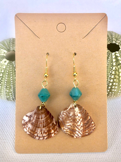 Caribbean Shell Earrings