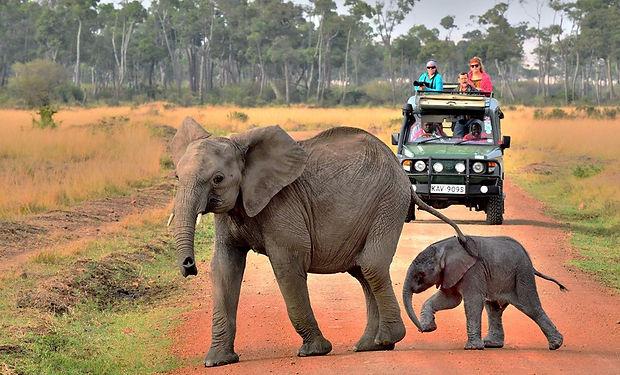 safari tour,korealuxryregistry,코리아럭셔리레지스트리