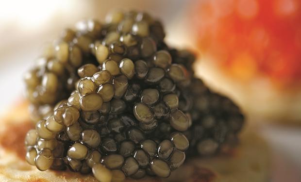 caviardeneuvic,korealuxryregistry,코리아럭셔리레지스트리