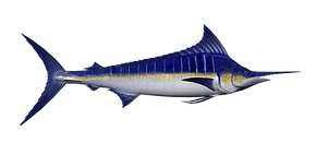 blue-marlin.png