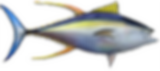 yellowfin-tuna.png