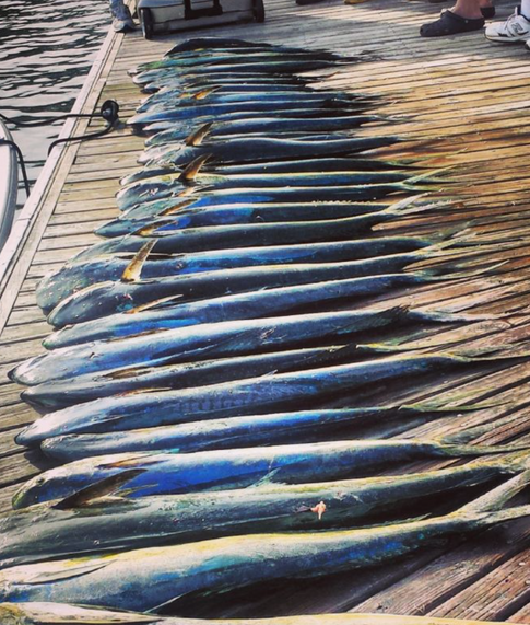 WB Mahi Mahi Fishing