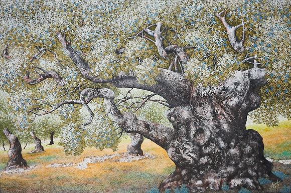 עצי זית, סמטו
