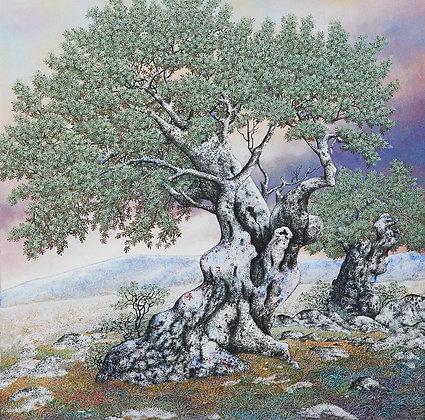 סמטו ציורים עצי זית