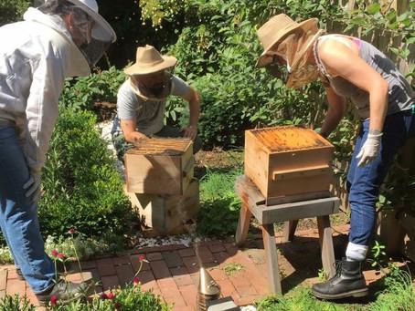 Rhode Island Beekeeping | Beekeeper Confidential