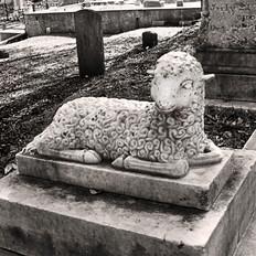 Child's Lamb