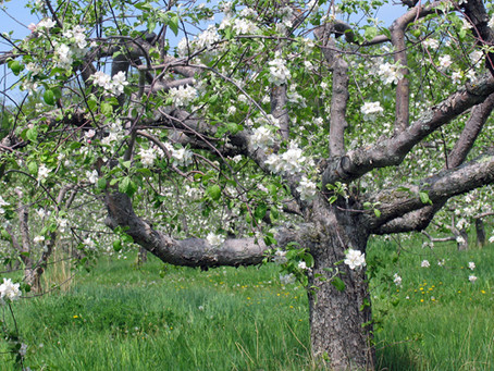 GOD WANTS TO PRUNE US FOR MORE FRUIT-BEARING