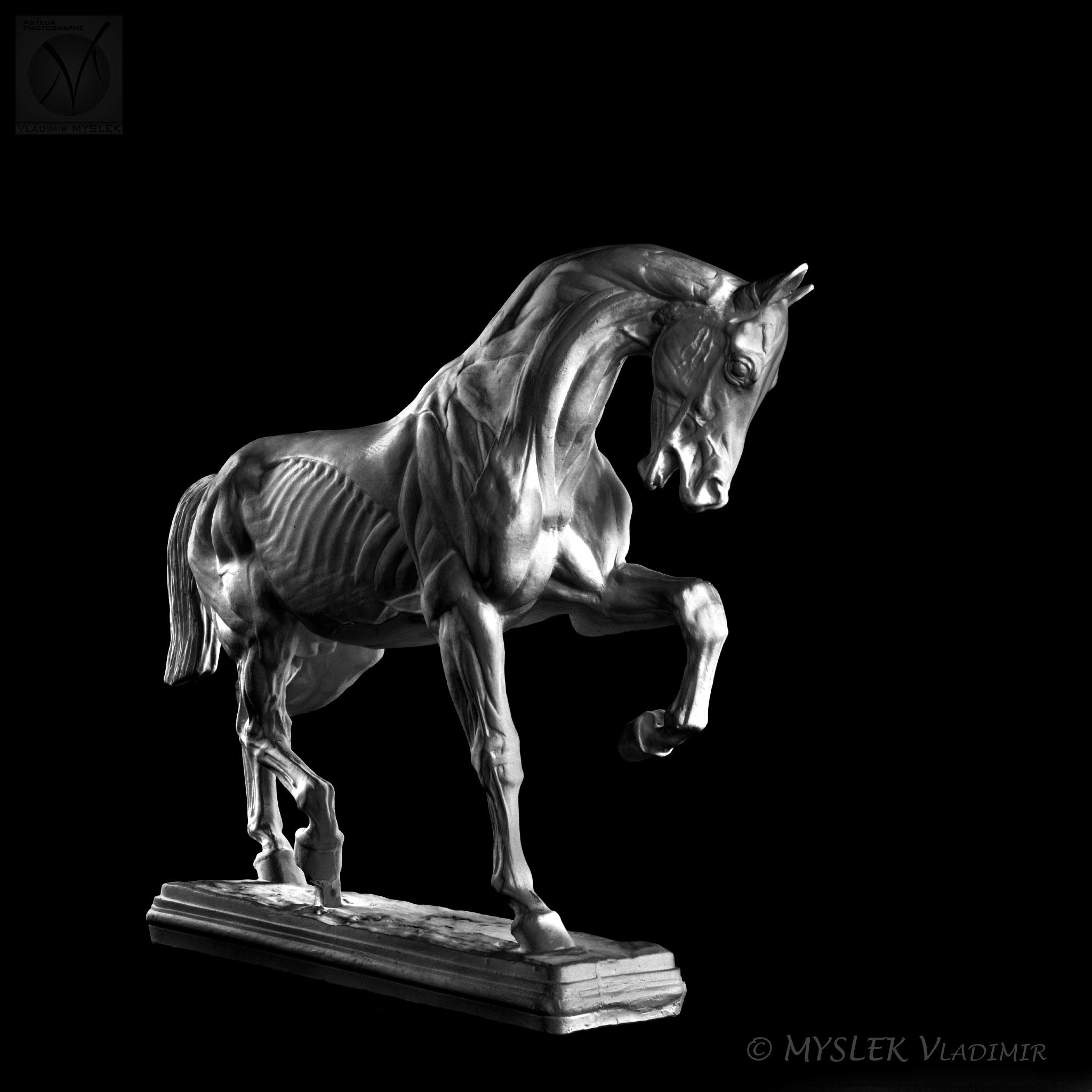 Cheval écorché de Isidore BONHEUR 3529n