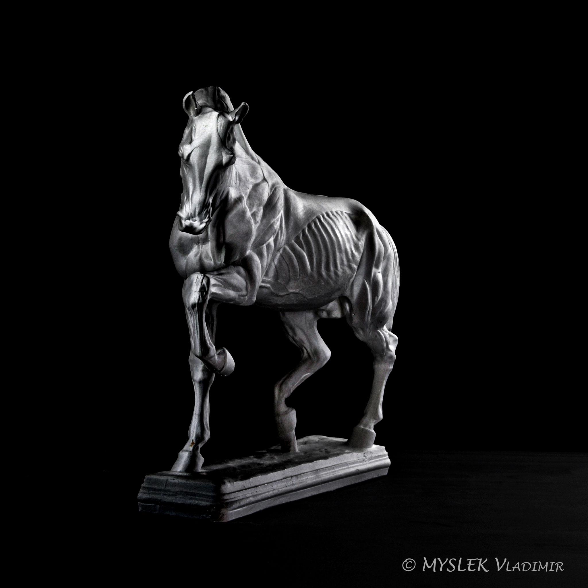 Cheval écorché de Isidore BONHEUR 3554n