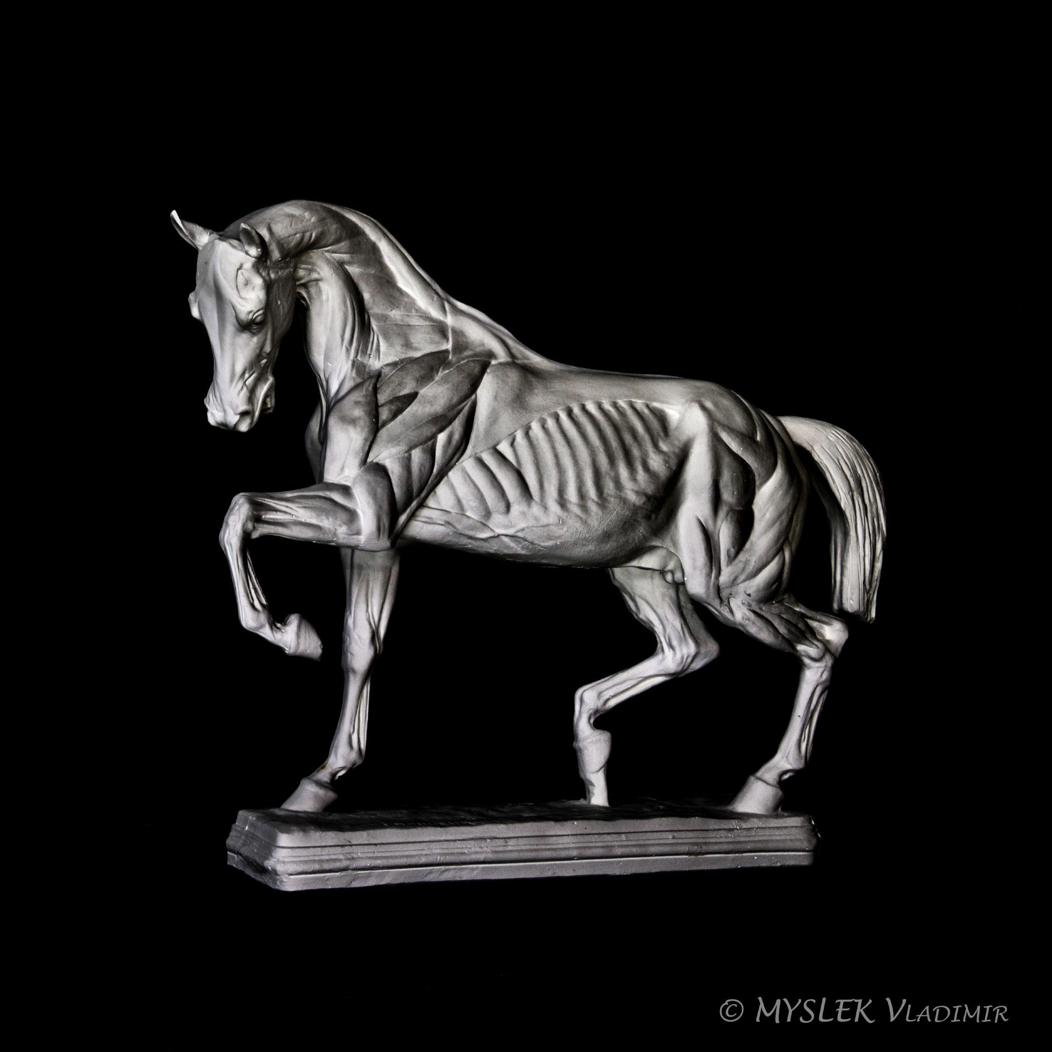 Cheval écorché de Isidore BONHEUR 3565n