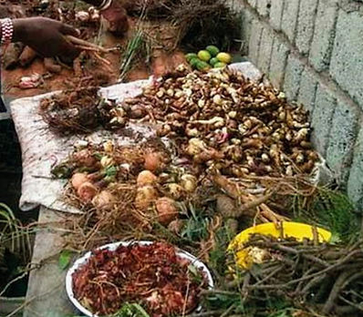 Herbal Medicines in African Traditional
