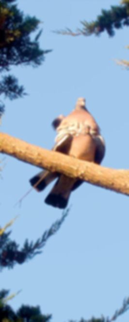 14-nidification.jpg