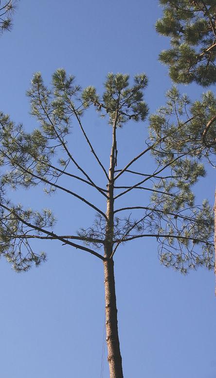 05-arbres_palombiere.jpg