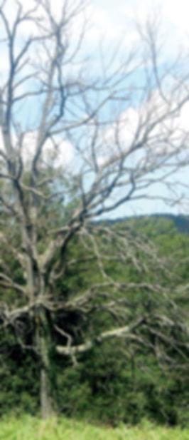 12-arbres.jpg