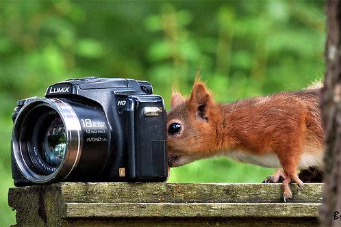 Tic photographe