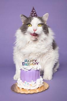 Kitty's Birthday