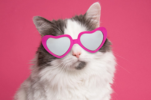 Kitty in Pink Heart Glasses
