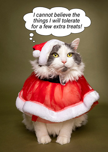 Merry Christmas Funny Cat in Santa Costume