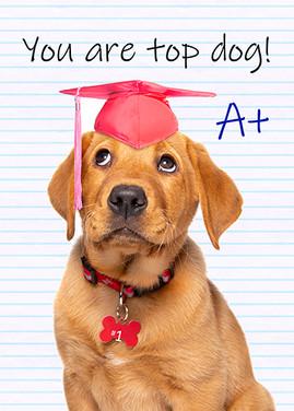 Congratulations Cute Puppy Graduate