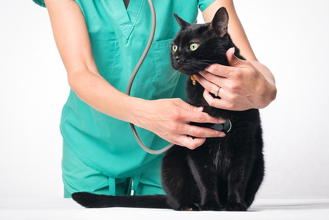 Vet Checking Black Cat