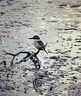 Mr Kingfisher Where Are You Going? by Kim Gee
