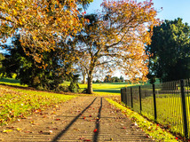 Sprinkling of autumn leaves at the park by Errol D'Souza
