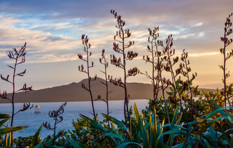 Sunrise over Rangitoto by Tereasa Wilson