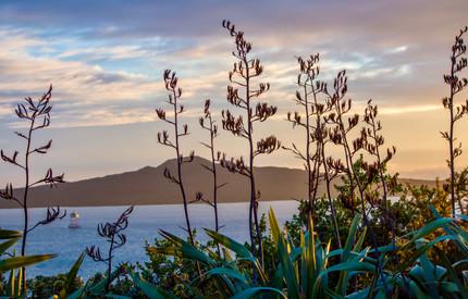 Sunrise over Rangitoto by Tereasa Wilson