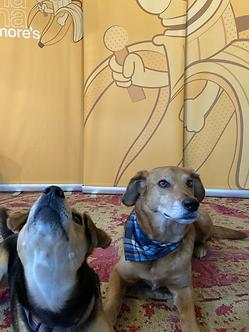 drewbarrymoredogs.HEIC