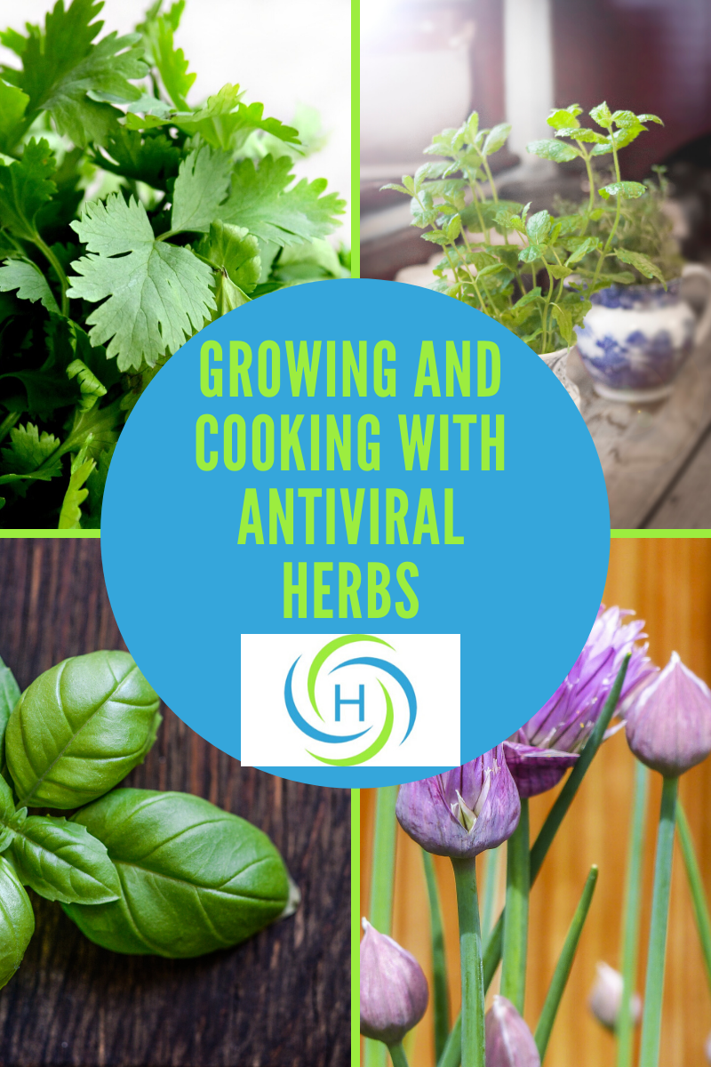 picture of antiviral herbs such as basil, parsley, chives and oregano