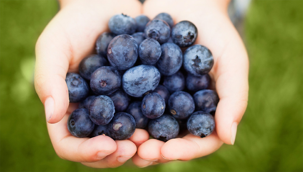 blueberries in a persons hand