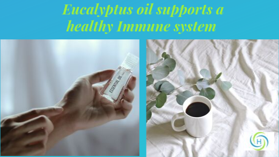 eucalyptus oil supports a healthy immune system
