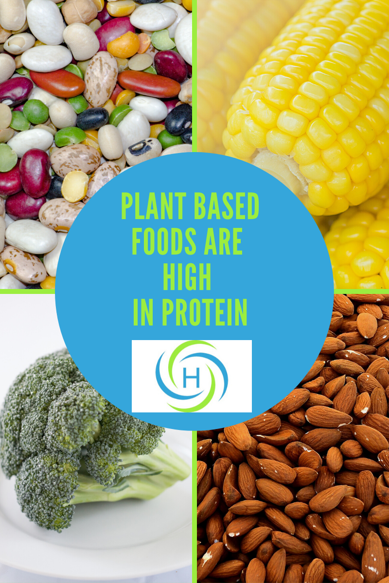 plant based foods are high in protein
