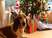 12 Ways to Keep You Dog Safe Over the Holidays