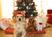 Christmas and Pets