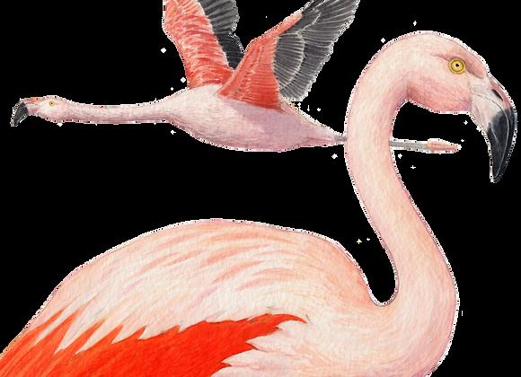 Polera Flamenco Niño