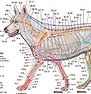 acu dog.PNG