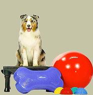 dog rehab.jpg